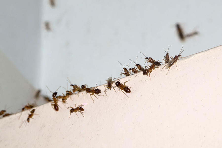 اساليب مكافحة الحشرات